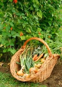 advantages of organic food