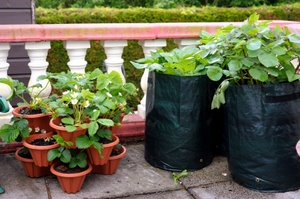 well organised vegetable containers
