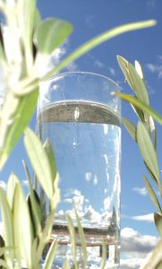 glass of water amongst olive leaves