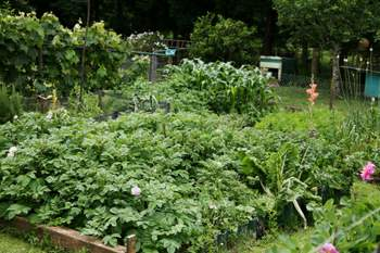 building raised garden beds result
