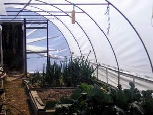 polytunnel inside south end