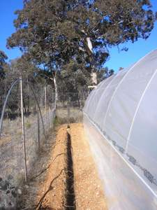 polytunnel trench