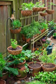 shelf of vegetables and herbs