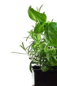basil and thyme growing in a pot