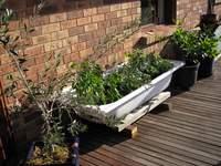 veggies in bathtub on deck
