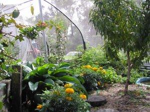dwarf fruit trees in small garden