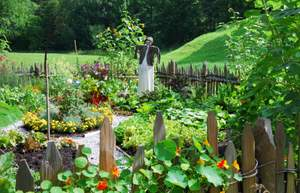 home vegetable garden with scarecrow