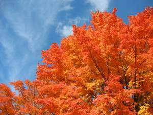 leaf mulch autumn tree
