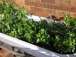 container gardening with bathtub