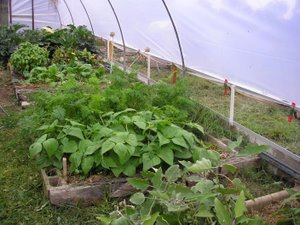 polytunnel ventilation