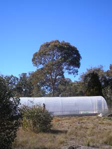polytunnel view from west