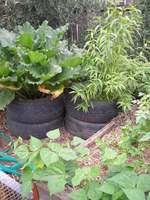 raised bed vegetable garden with tyre stacks