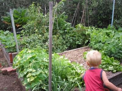 raised bed vegetable garden for kids