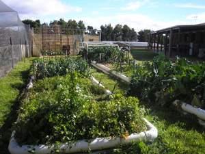 vegetable garden in winter
